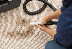 what is the best carpet steam cleaner for pet urine